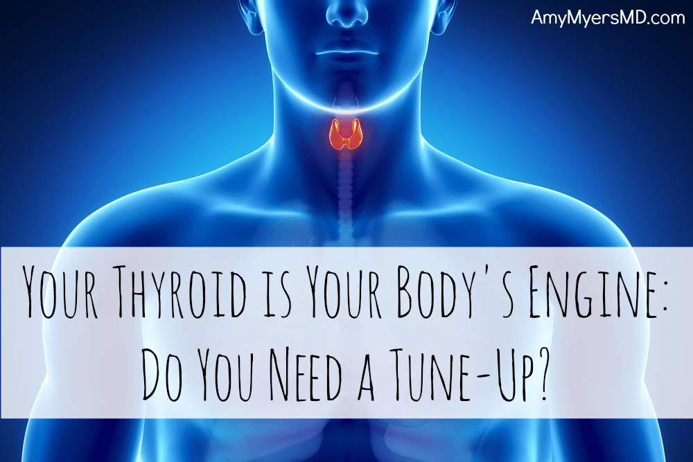 Your Thyroid Is Your Body's Engine - Do You Need A Tune-up? - Rendered image of a thyroid gland in the body - Featured Image - Amy Myers MD®