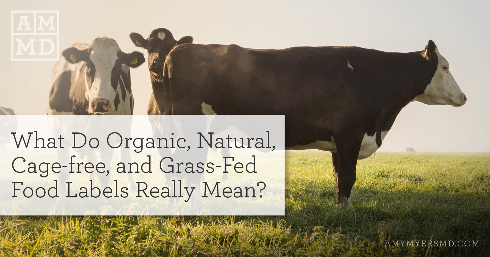 What Do Organic, Natural, Cage-free, and Grass-Fed Food Labels Really Mean? - Cows In A Field - Featured Image - Amy Myers MD