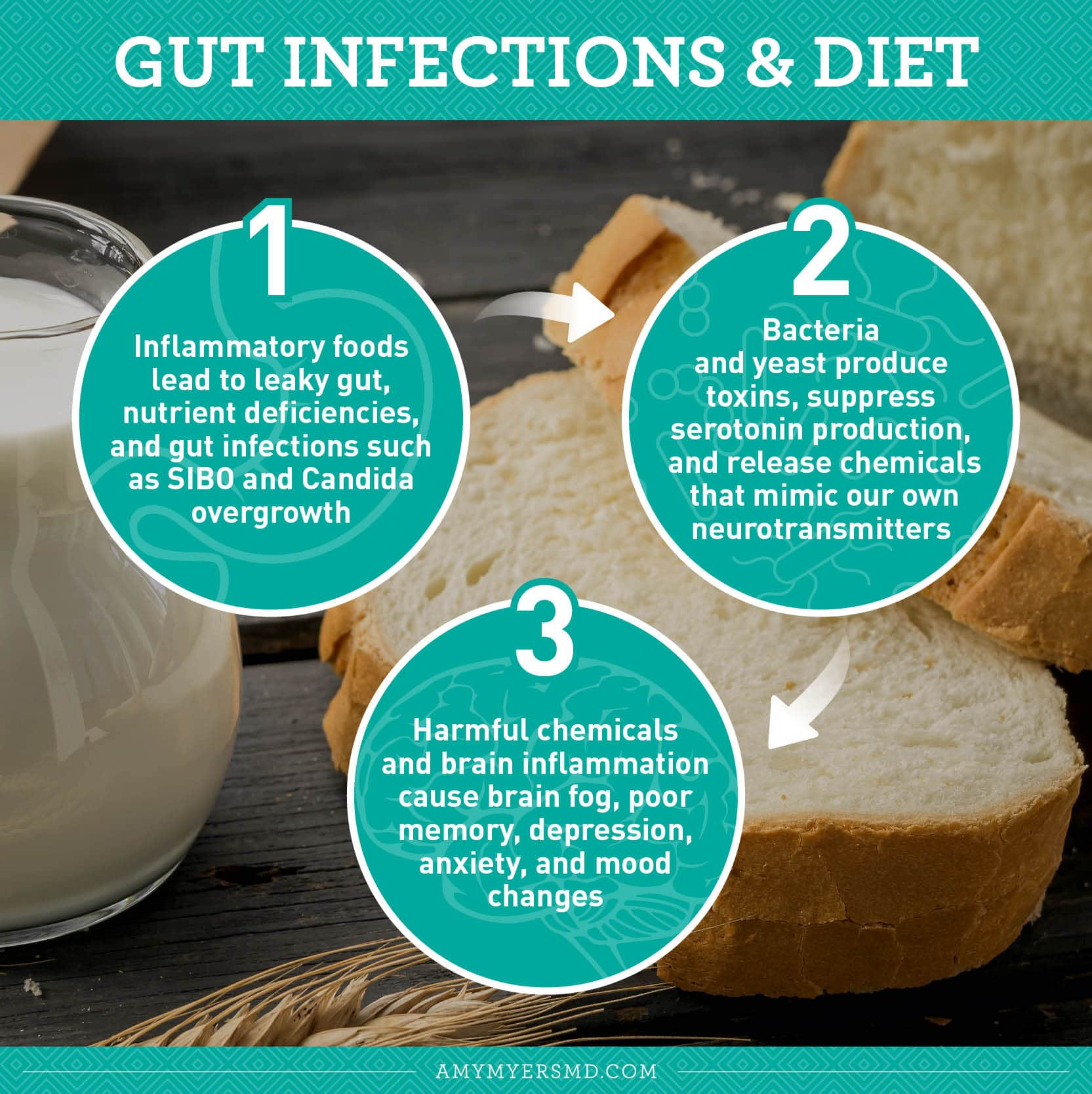 Gut Infections & Diet - Infographic - Amy Myers MD