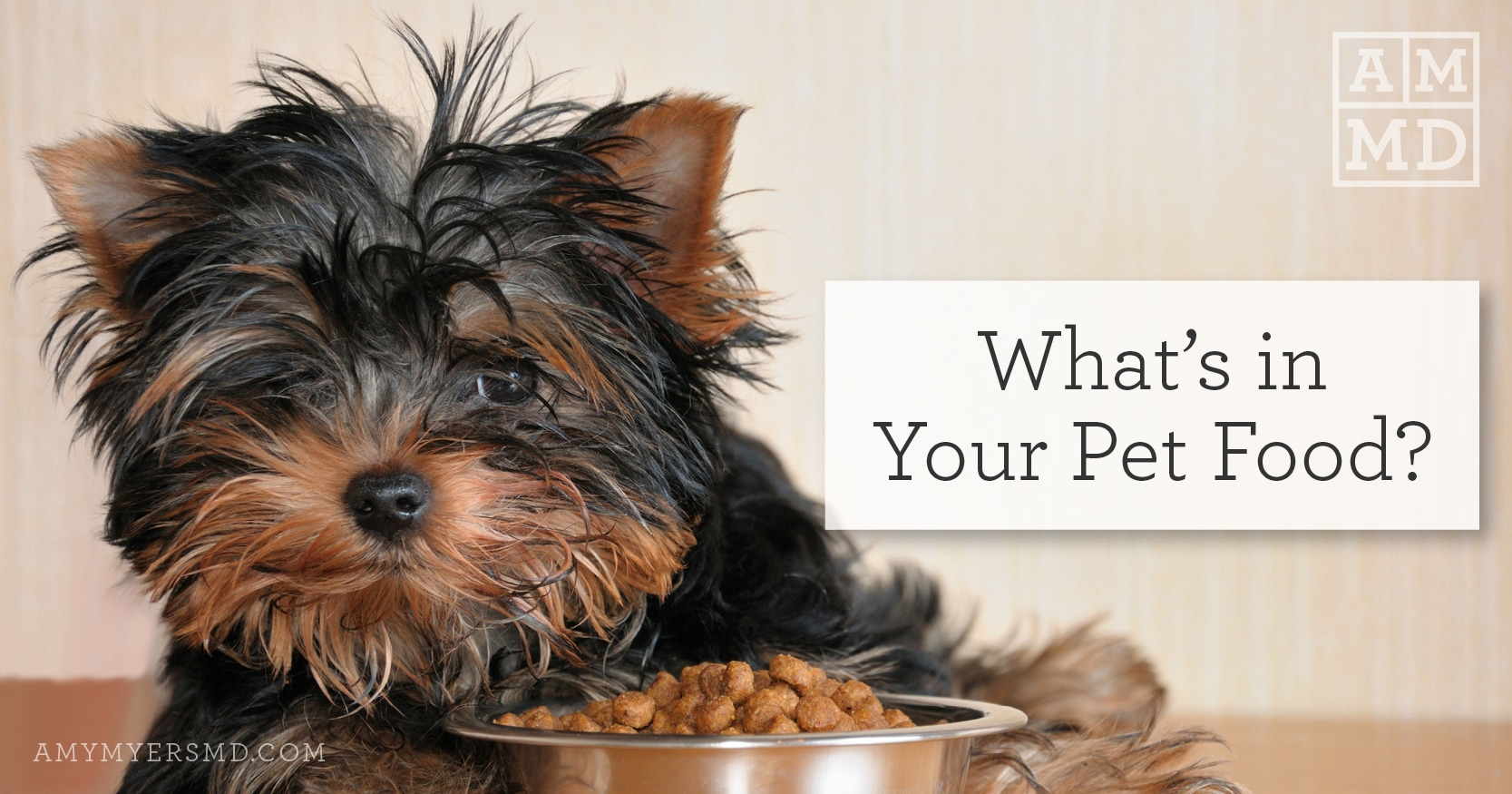 What's In Your Pet Food? - Small Dog With a Bowl of Food - Featured Image - Amy Myers MD