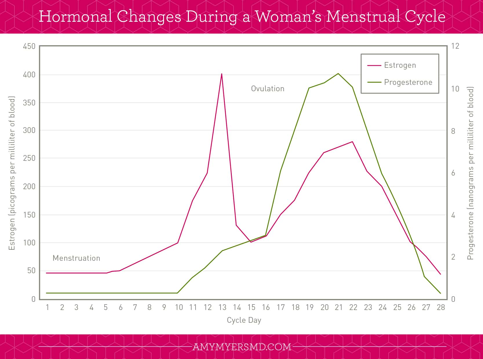 Hormone Changes During a Woman's Menstrual Cycle
