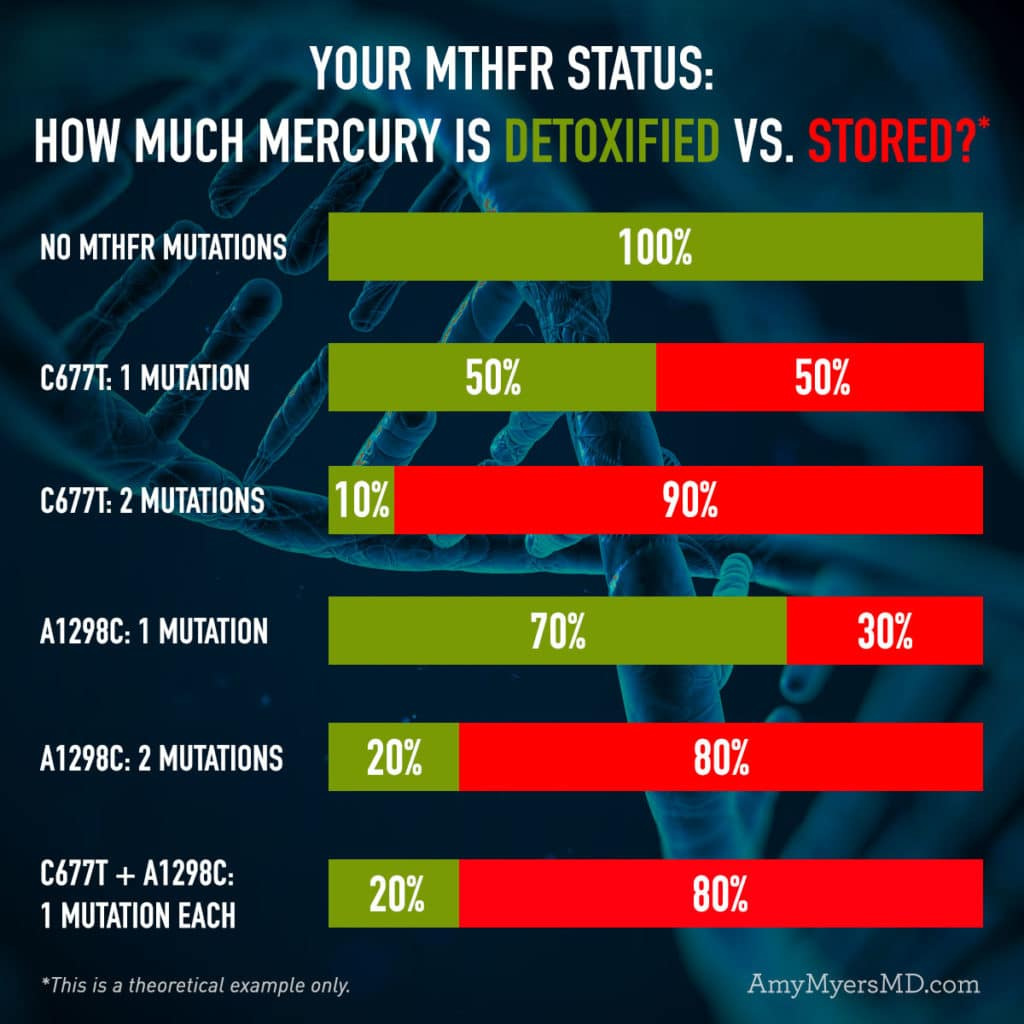 Your MTHFR Status: How Much Mercury Is Detoxified vs. Stored - Infographic - Amy Myers MD®