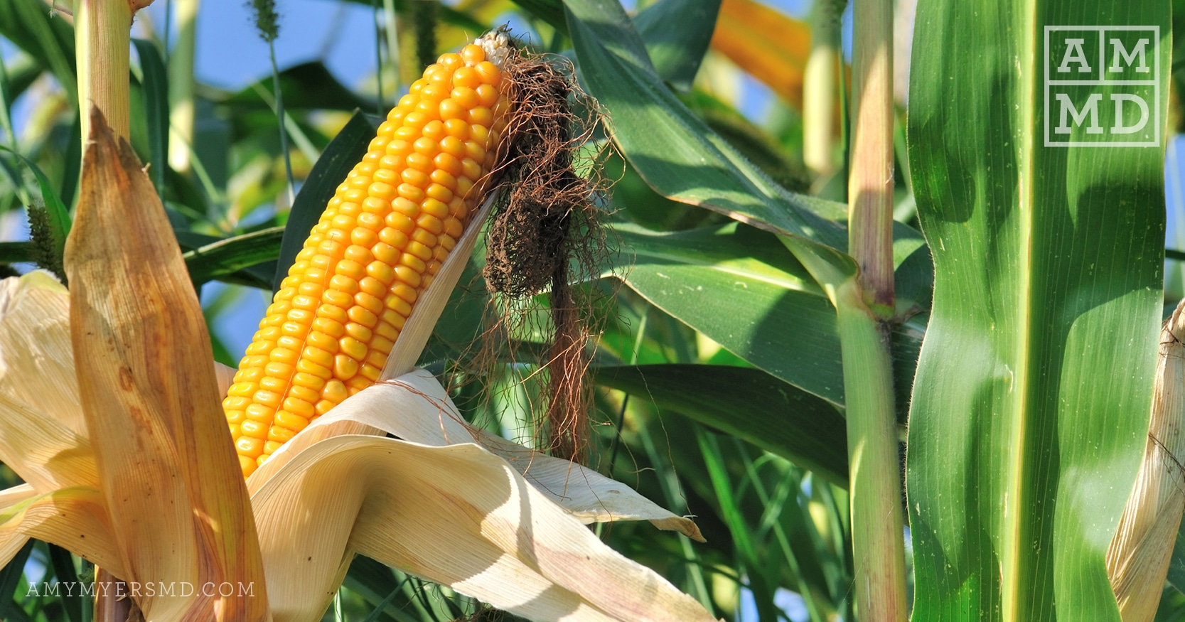 3 Reasons to Avoid GMOs If You Have an Autoimmune Disease