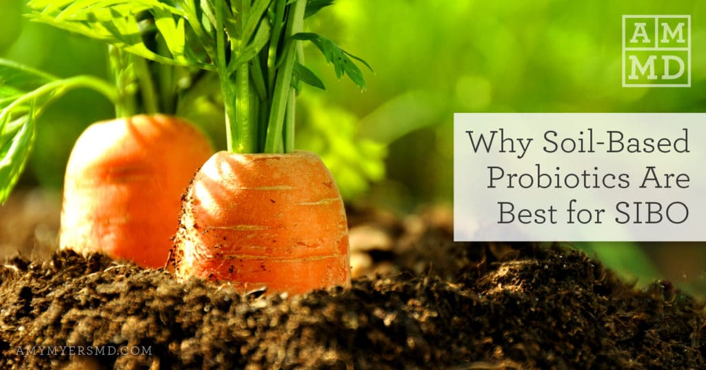 Why Soil-Based Probiotics Are Best for SIBO - Carrots In A Garden - Featured Image - Amy Myers MD