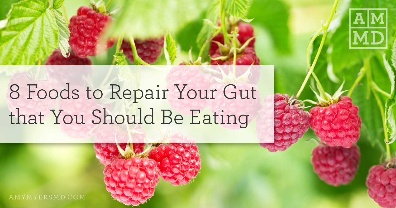 8 foods to repair your gut