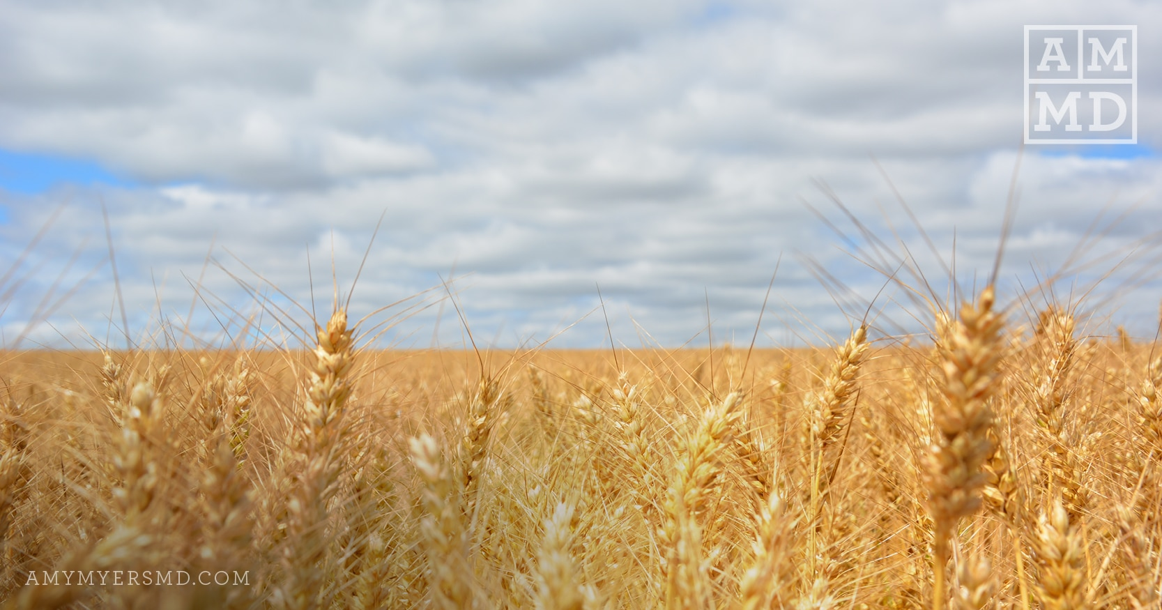 How to Test for Gluten Intolerance and Celiac Disease ...