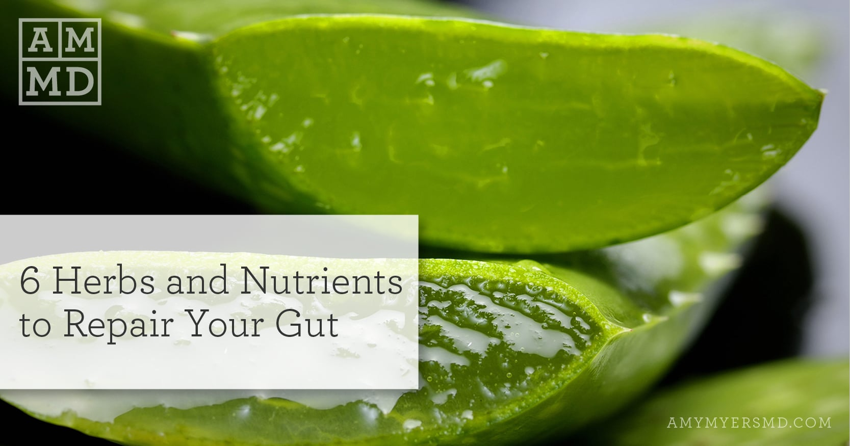 Repair Your Gut with 6 Herbs and Nutrients - Amy Myers MD