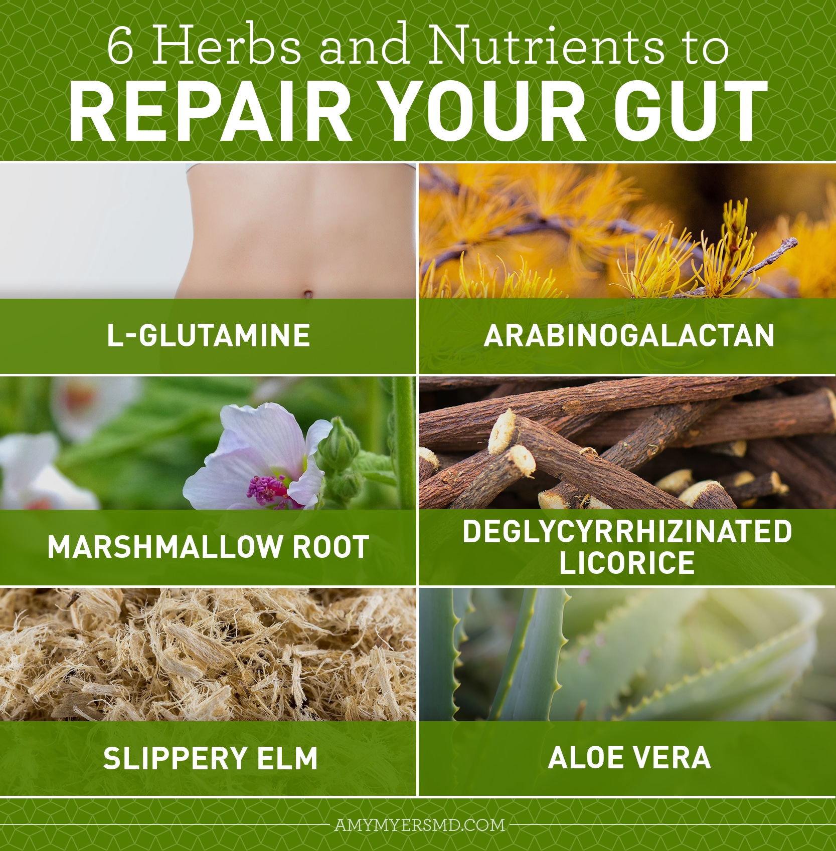 Herbs & Nutrient to Repair Your Gut - Infographic - Amy Myers MD