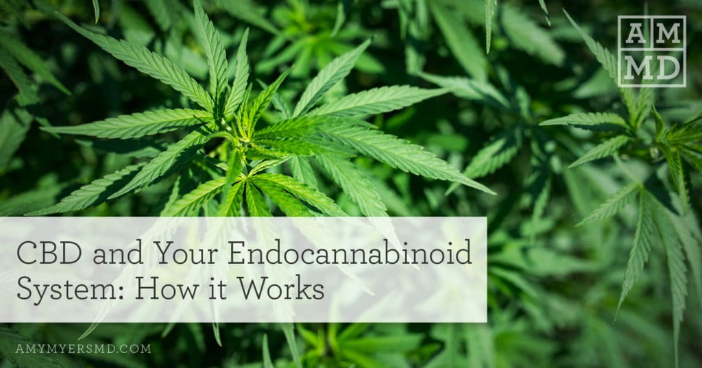 CBD and Your Endocannabinoid System: How it Works