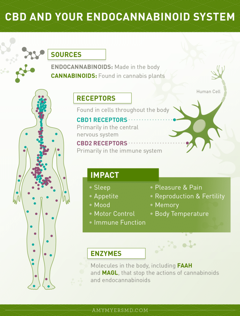 infographics of the three parts of the endocannabinoid system in the body.