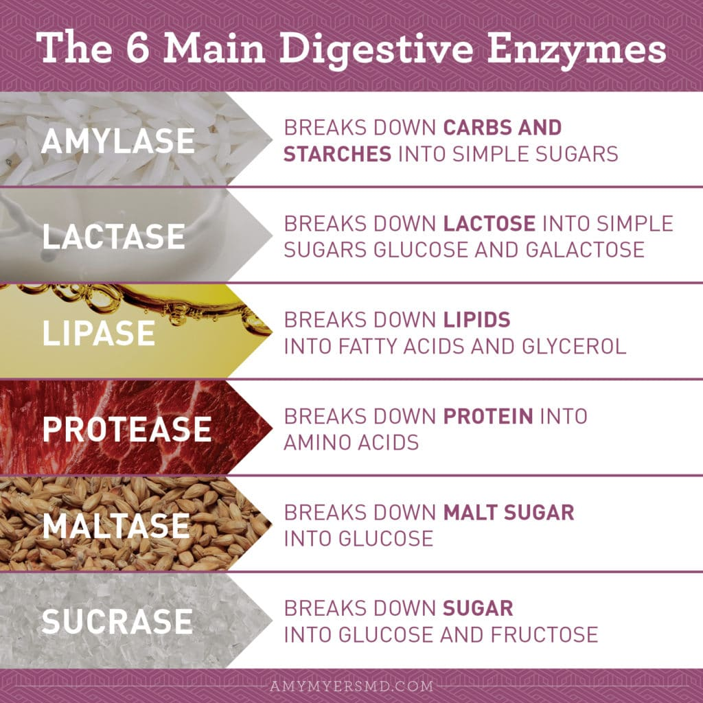 6 Main Digestive Enzymes - Infographic - Amy Myers MD