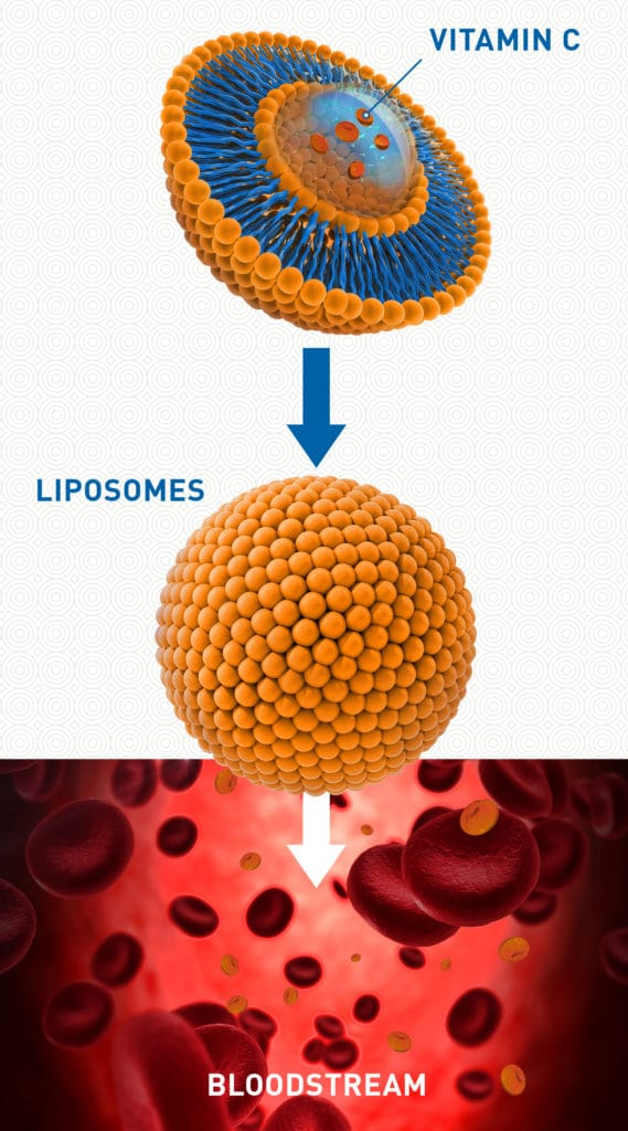 How Liposomal Vitamin C Works in Your Body - Infographic - Amy Myers MD
